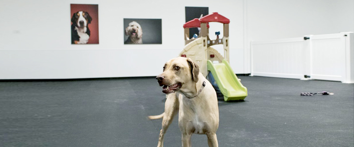 A dog enjoying himself in a dog friendly environment. There is a castle to play with and other toys to add to the fun.