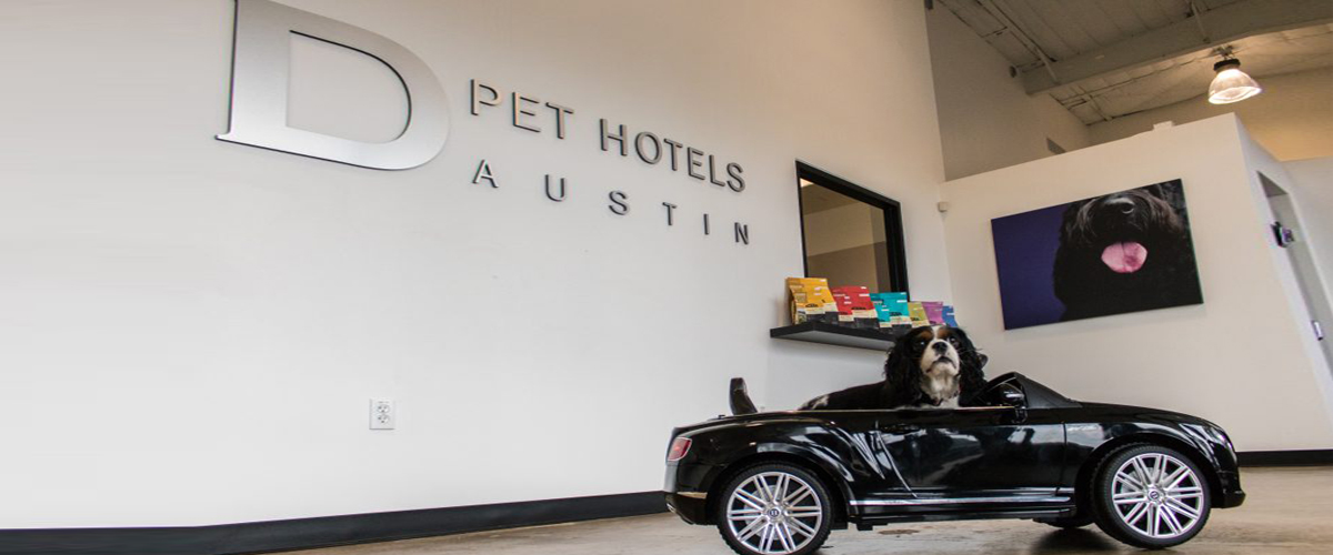 A dog enjoying the luxury provided by the d pet hotel in new york. The dog is sitting in a car which is one of the many luxuries here