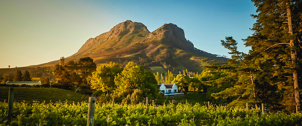 MolenVliet Wine Estates, South Africa, River Dwars, wedding destination, vineyards, landscaped gardens, mountain with greenery