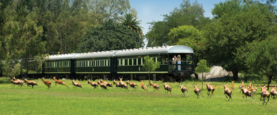 luxury train travel South Africa, the luxury train travelling through a national park, safari between Pretoria and Durban